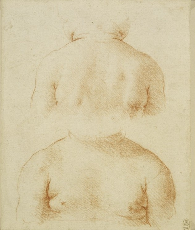 Leonardo, Study of a childs shoulders, seen from behind, about 1495, National Gallery, 2011