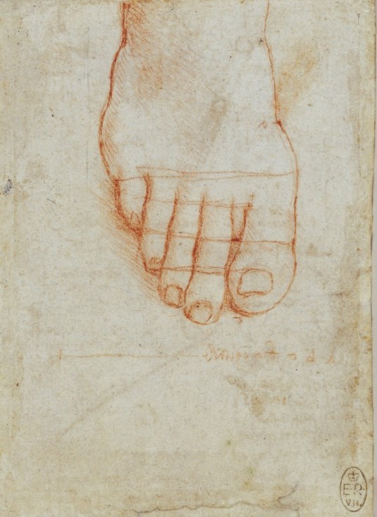 Leonardo, A right foot seen from above, about 1495, National Gallery, 2011